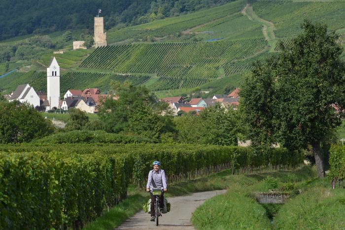 Wein und Radeln im Elsass. Foto: Thorsten Brönner.